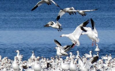 Observer les oiseaux, dans le respect de la propriété privée!