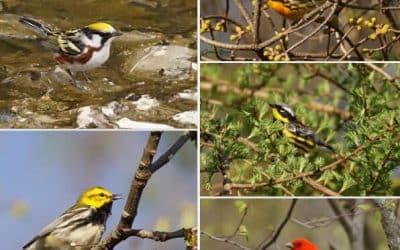 Des membres du COHR dans le magazine Québec Oiseaux