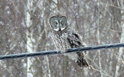 Une Avicourse d'hiver pour tous !