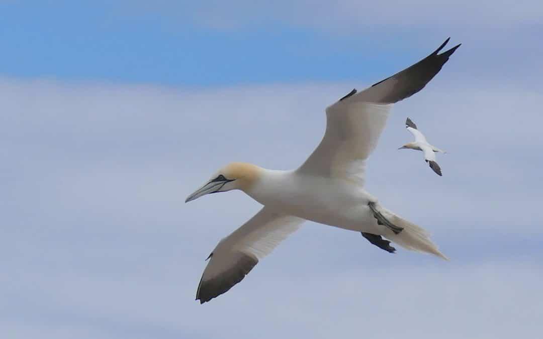 Un séjour ornithologique en Gaspésie!