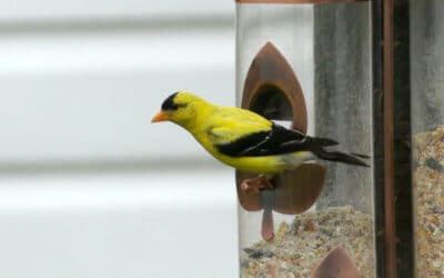 Des oiseaux à la maison